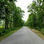 arabari jungle